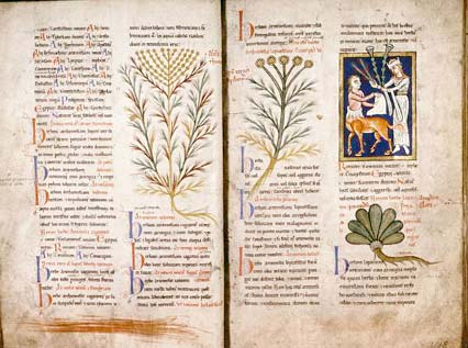 planta de la absenta en fascimil antiguo