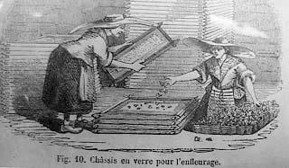Proceso de enfleurage, grabado francés